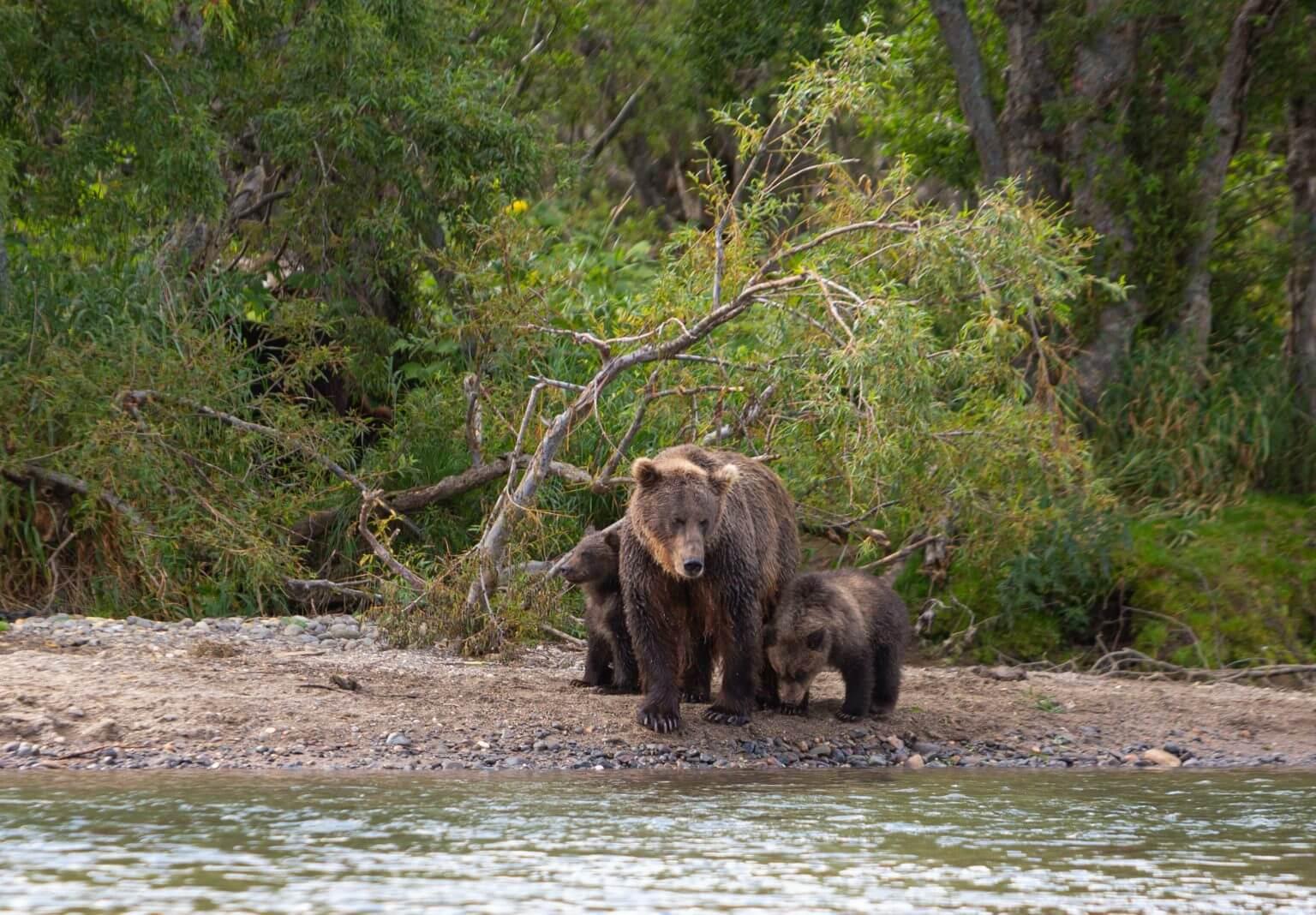 matka niedźwiedź